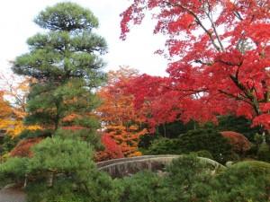 japon 11 otoño momiji